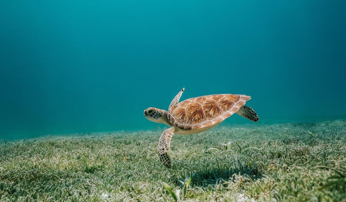 3 motivi per prendersi cura degli oceani